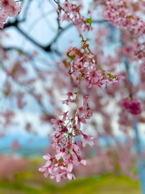 花見 ソロツー